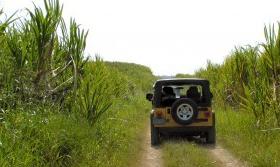 punta-cana-safari